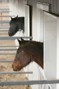 How to talk to your horse veterinarian about horse health equisearch