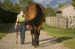 How to detect lameness in horses equisearch